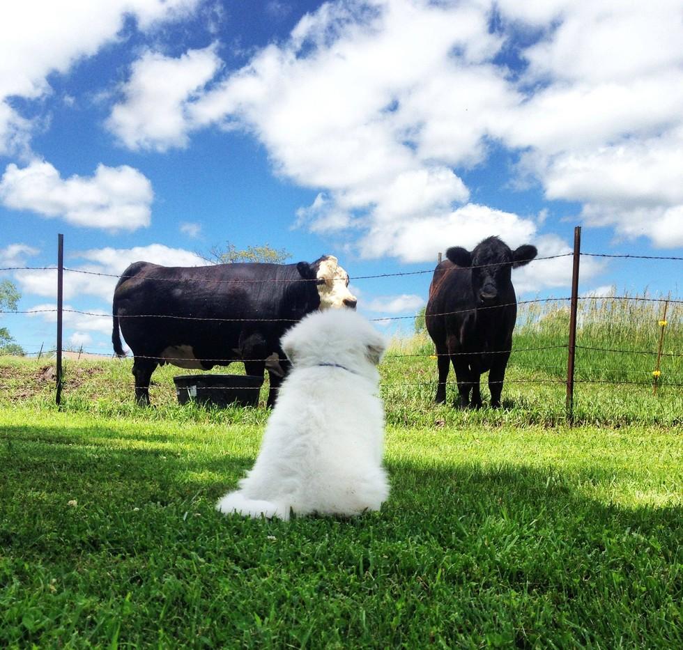 11.「人生的意義究竟是什麼呢?牛啊!是點心嗎?請你告訴我就是點心!」