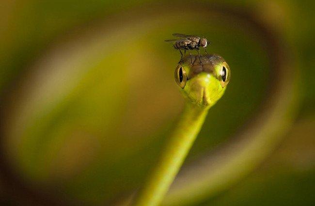 就連蒼蠅停在頭上都看起來這麼大!
