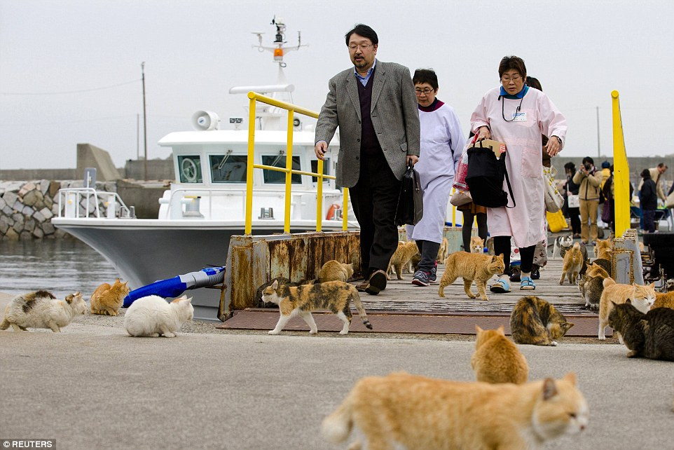 不僅對於貓咪沒有太大的興趣,當地的居民對於遊客的造訪其實也沒什麼興趣,只不過是想要好好地安享天年而已。(等等,原來這些居民才是真真正正的貓啊?)