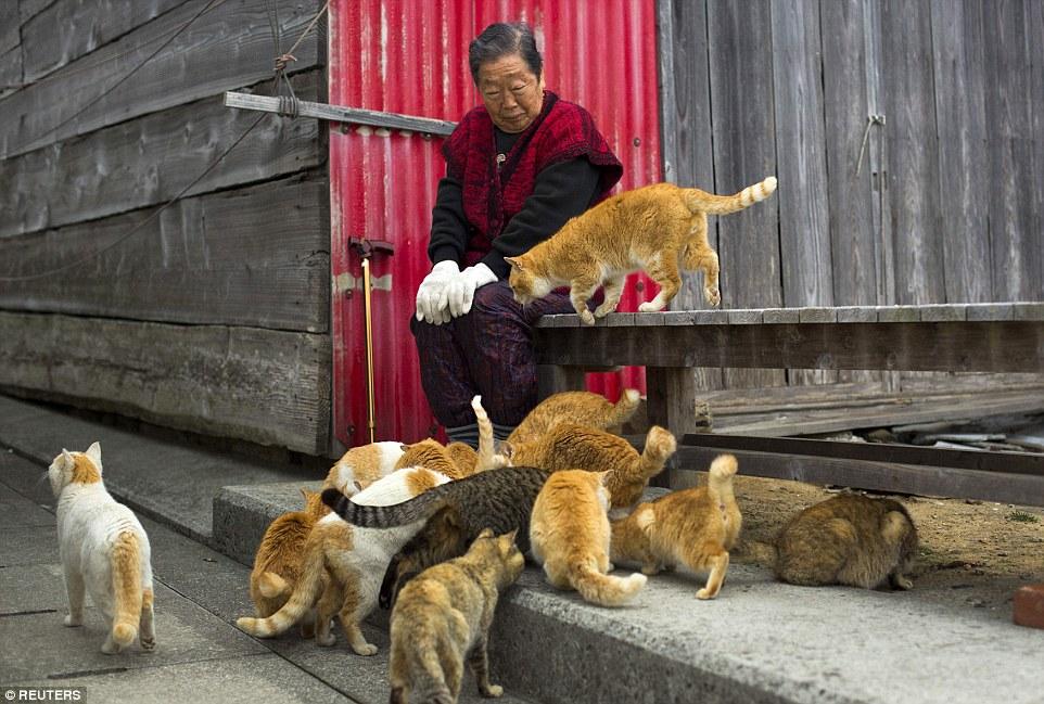 青島在1945年的時候曾經是900個人的家,不過時至今日,青島上頭的人流,多半都是來自日本大陸、要來這個「貓島」一日遊的遊客。