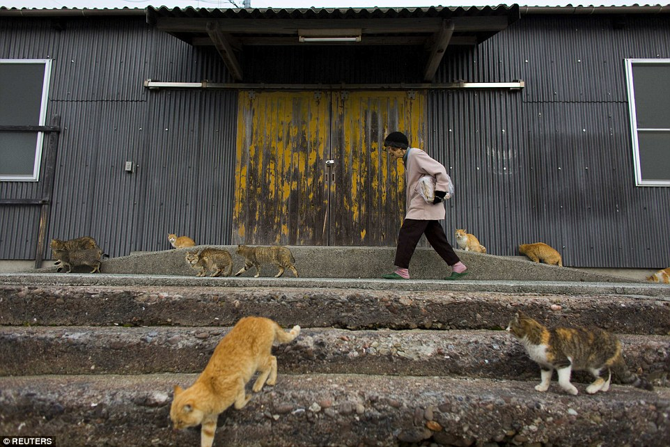 Local residents haven't taken too kindly to the cat tourists. They say they don't mind them coming, but want to be left in peace