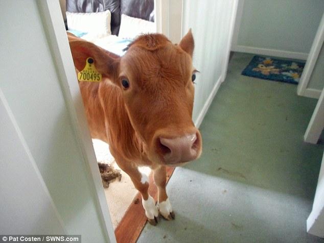 一名女士忘了鎖家門就去洗澡,出來才發現家裡被...入侵了!