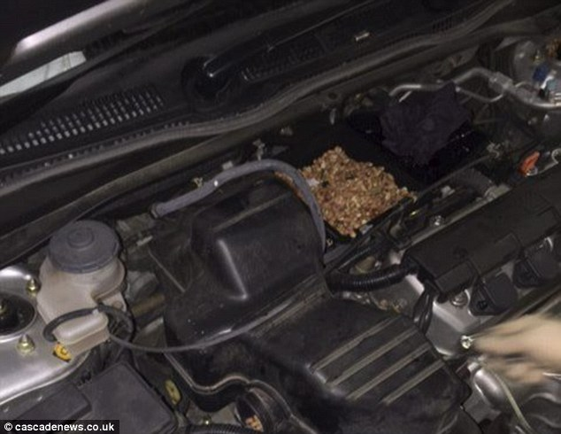 Mr Evansspent an hour sucking the nuts out of the air filter with a vacuum cleaner and collected enough to fill half of a carrier bag. He said he only made the discovery after diagnostic tests failed to find the problem