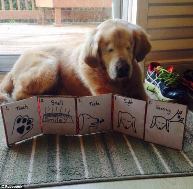 Smiley在獲救之後,也到了醫院救了許多人。目前他可是一位「狗醫生」,常常和主人去醫院陪伴自閉症兒童與老人。許多從來不會笑的病人,在看到Smiley之後,都會綻放出笑容了。