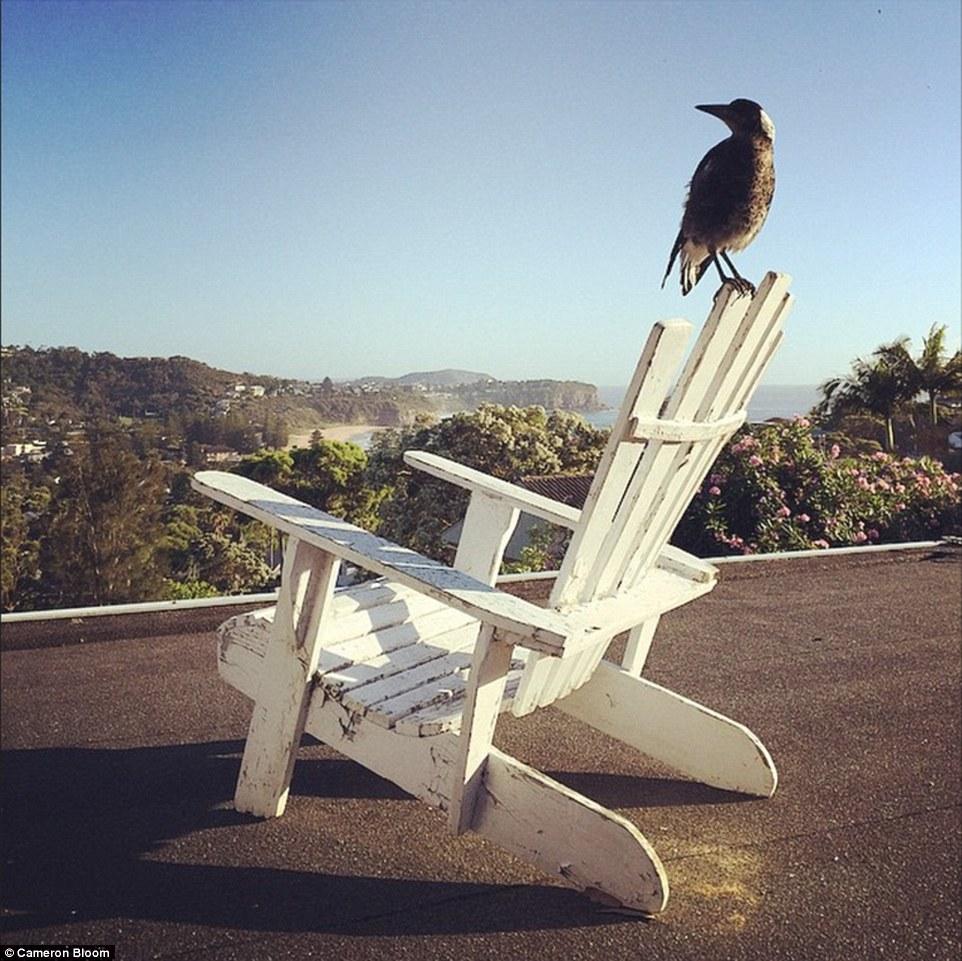 這隻鳥以為自己是一隻狗!澳洲這戶人家的寵物會一起吃飯睡覺玩耍刷牙...!