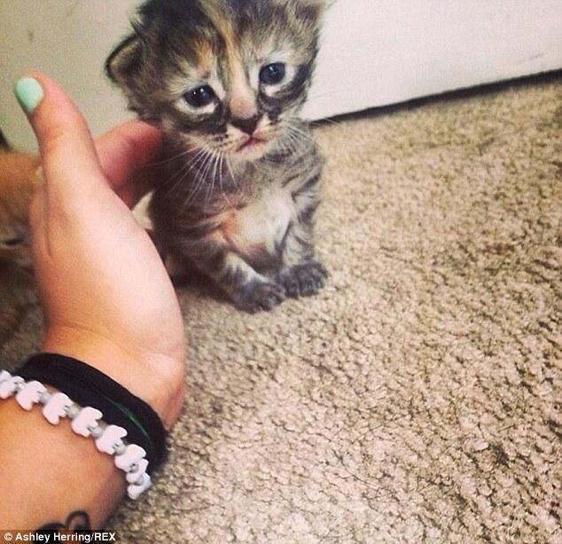 研究顯示:這年頭越來越多的狗狗貓貓也開始在吃抗憂鬱症的藥了。這就是為什麼...