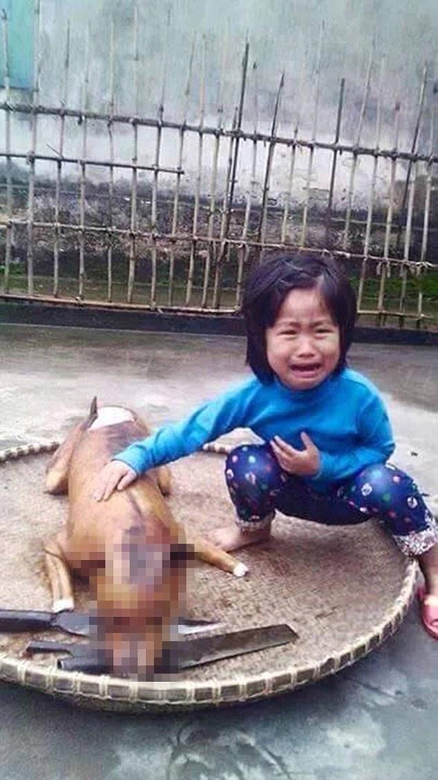 據說,這位不知名的女孩住在越南北部的鄉間,她養了這隻叫做「小花」(Flower) 的狗狗已經有3年了,所以狗狗離奇失蹤也讓她難過不已。她曾經試圖要把小花找回來,但一直徒勞無功。
