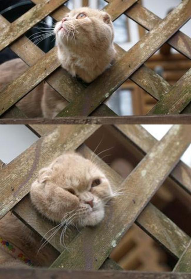 21隻犯下貓生中最大錯誤的貓咪。