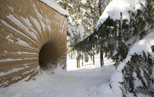在挪威山上這座神秘的木洞裡頭,其實藏著大人小孩都絕對迷戀的秘密!