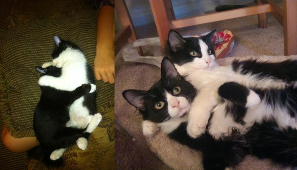 1年後仍然一直抱在一起的貓兄弟!