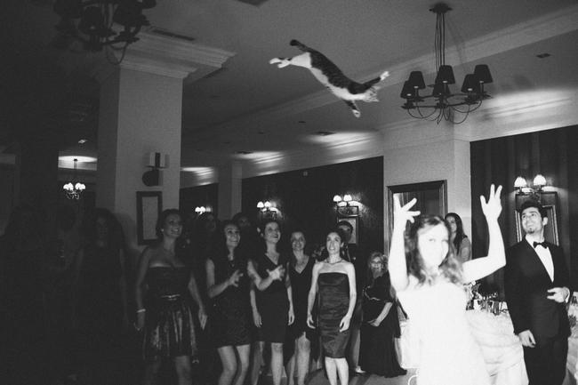 這隻真的不是想要跳上吊燈的貓咪嗎?