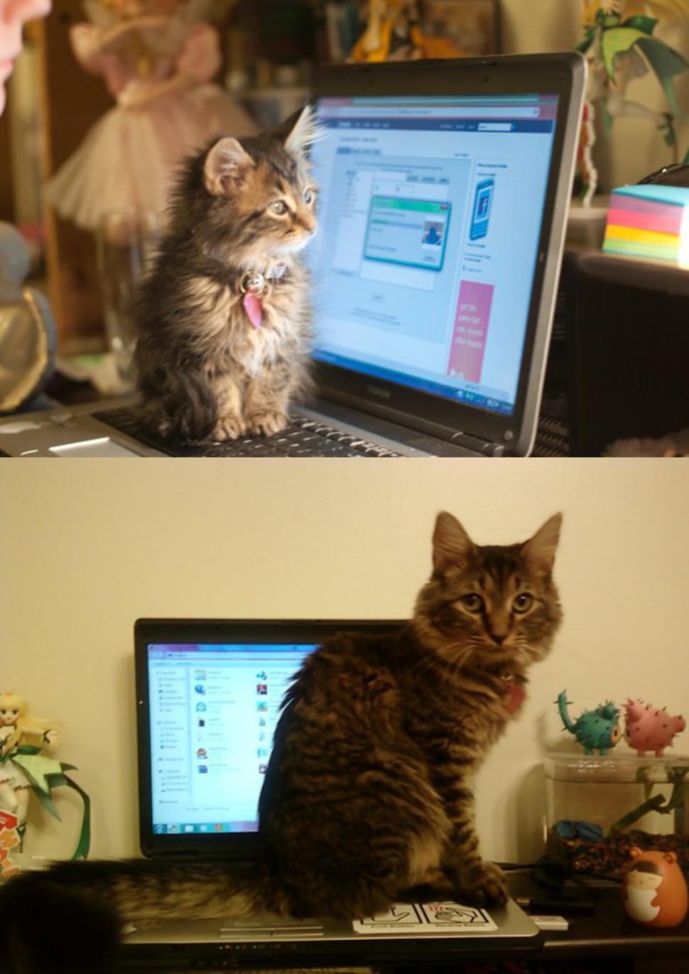 從小就喜歡坐在電腦上面!