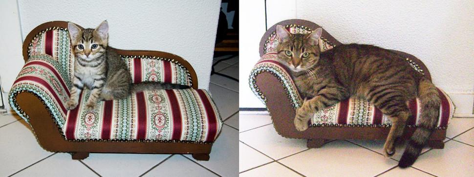 原本的小床也變成沙發了!