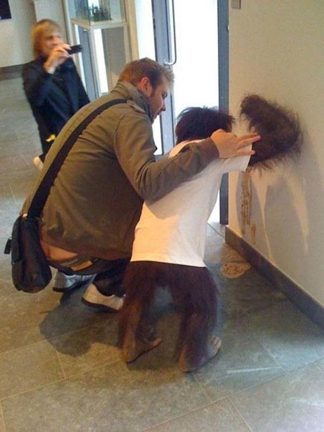 這個人正在照顧一隻嘔吐的猩猩...?
