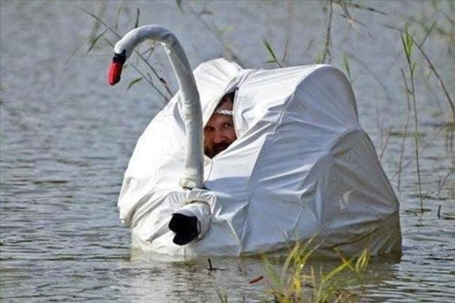 為了拍攝天鵝而進行完美偽裝的攝影師...