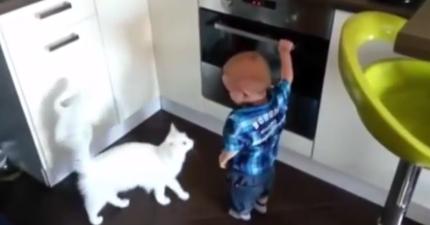 白貓看到小嬰兒就要把手伸進烤箱裡了,下一秒她站起來做出驚人的英雄舉動...