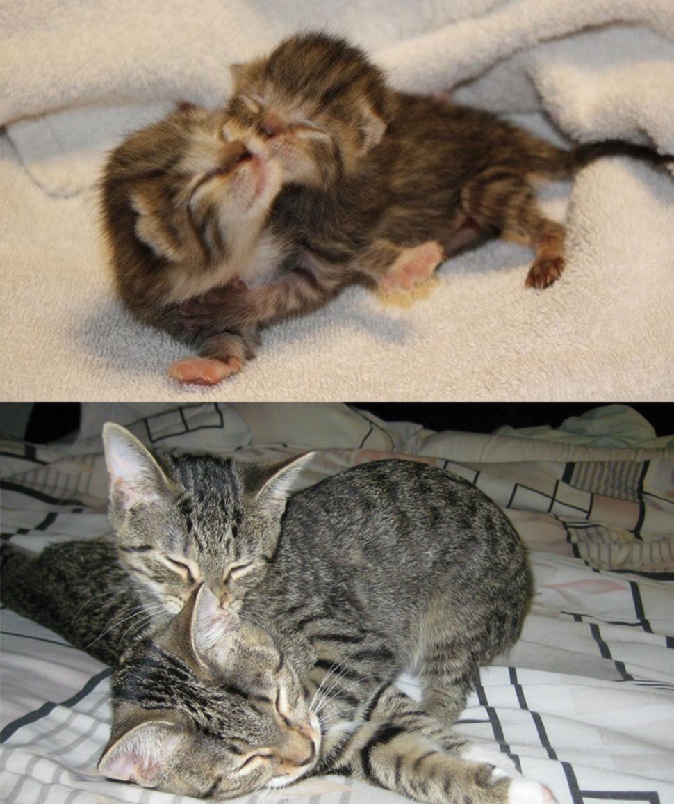 過了兩年他們仍然抱在一起睡覺!