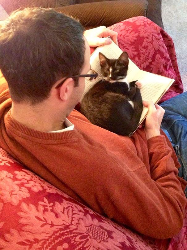 這25隻貓咪為了得到主人的注意,於是無所不用其極地展開最可愛的攻勢!