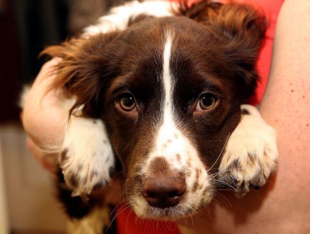 研究證明:當你摸狗狗的頭時,你的體內就會產生這樣的變化。