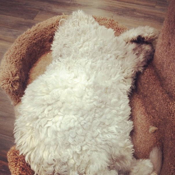bitchy-resting-face-sheep-cat-albert-12-605x605