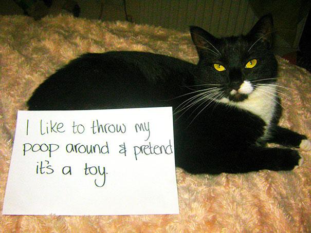 20隻犯下大錯而被拍下他們的罪行的貓咪。