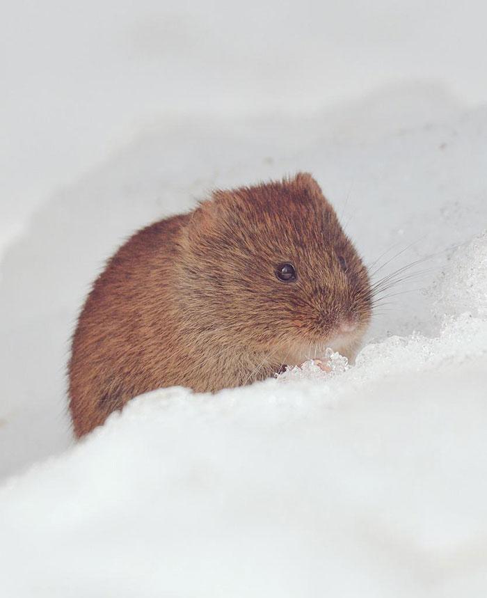 7種北海道特有的萌爆小動物,其中一種居然是皮卡丘的創作靈感來源!?