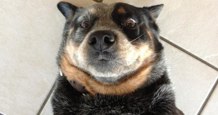 這23隻狗狗透過親自示範演出,要來教大家「如何拍出美美的自拍」!