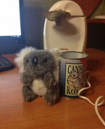 收到這罐澳洲來的「罐裝無尾熊」,他雖然不敢吃但還是恐懼地把它打開了...