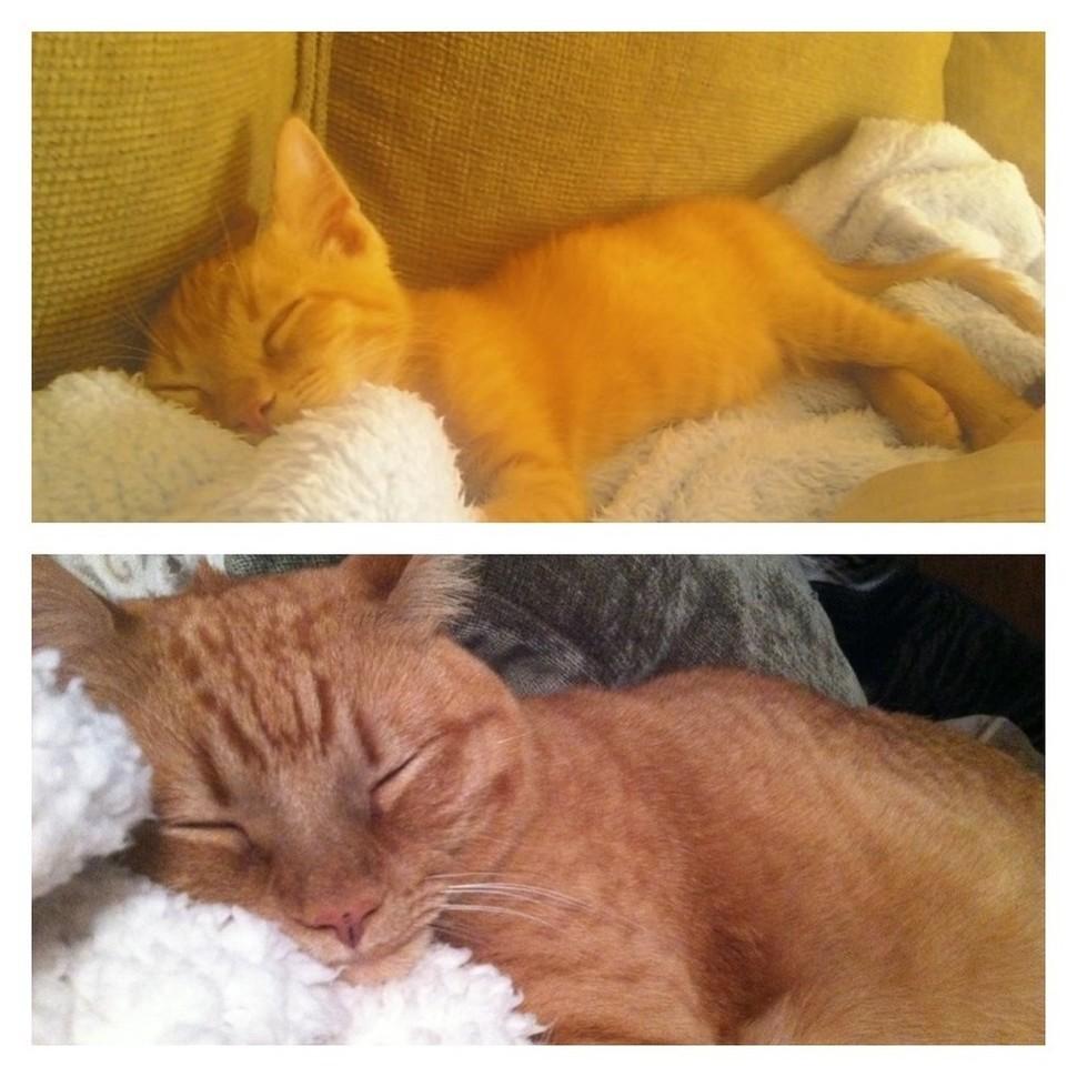 睡著的可愛模樣即便過了3年、一樣很可愛!