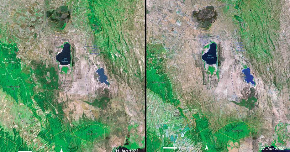 5. 非洲肯亞 (Kenya) 雨林面積縮減的對比圖,這裡曾經是多種動物的棲息地。