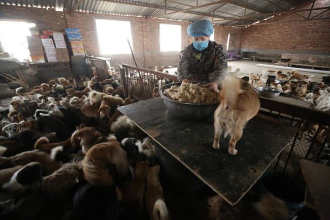 這5位中國老婦人領養了這1300隻珍貴的小生命,就是為了一個很偉大的原因。