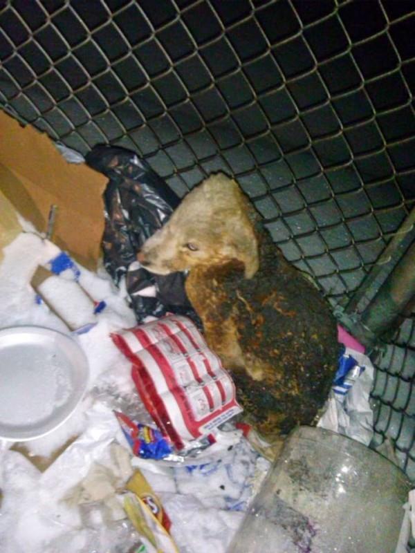 他發現了一個正在燃燒的垃圾桶,近看竟發現了令所有人髮指的惡行!