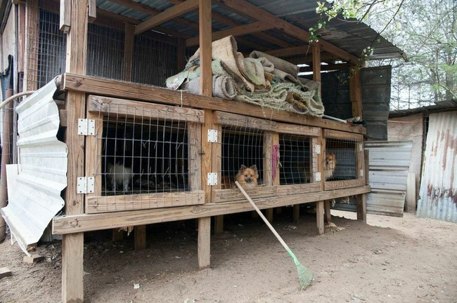 Along with the 130 pups, some barely alive, they discovered the remains of several deceased dogs in the appalling conditions.