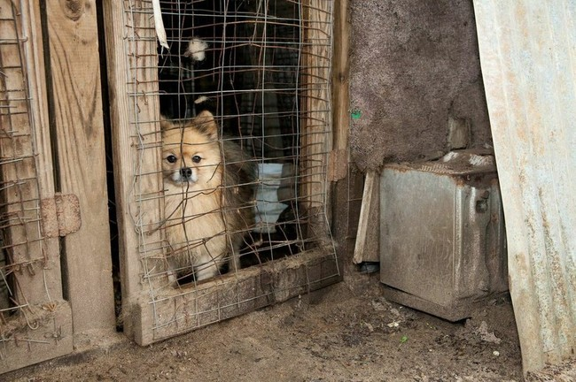 """""""As is the case with most puppy mills, these dogs were treated as products for sale and not valued as living beings,"""" Rickey noted."""