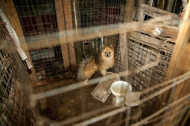 The owners, Rebecca Miller and Janice Freeman, were taken in and detained on charges of cruelty.