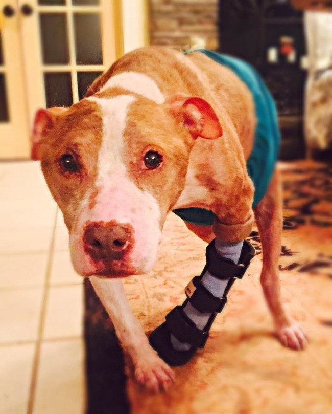 He still needs surgery to fix his fractured leg...