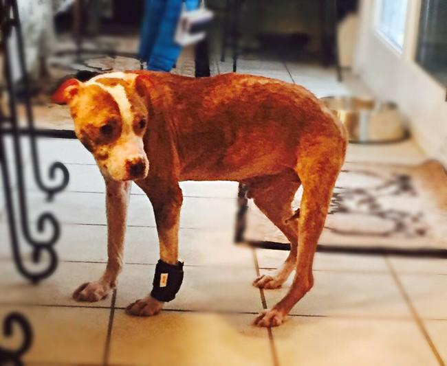 Rudy被找到的時候極度營養不良、全身佈滿傷口 ,有些傷口深到都可以看到骨頭。