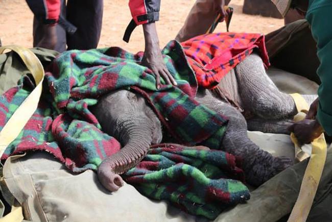這名老太太40年來一個人對抗可惡的偷獵者,她保衛動物的照片會讓任何人看到都淚流滿面!