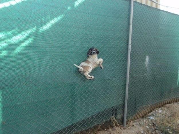 15個遭遇到人生最大難關的苦命狗狗