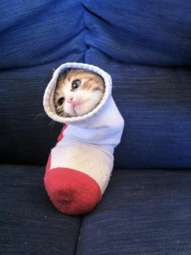 這隻貓咪雖然蠢,但可愛度已經完全破表了...