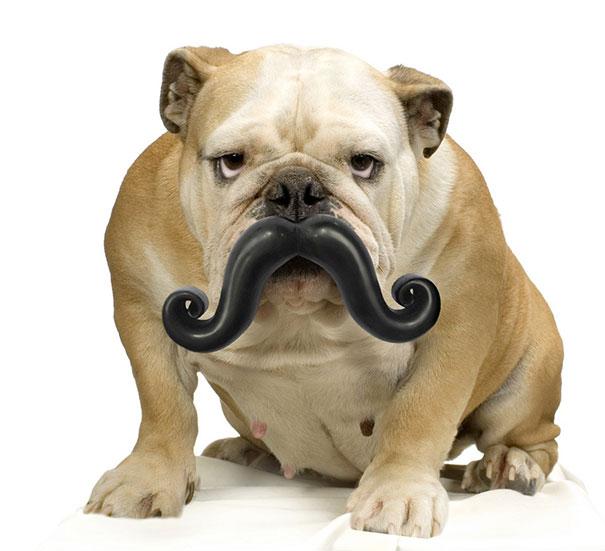 Humunga Stache Durable Dog Toy
