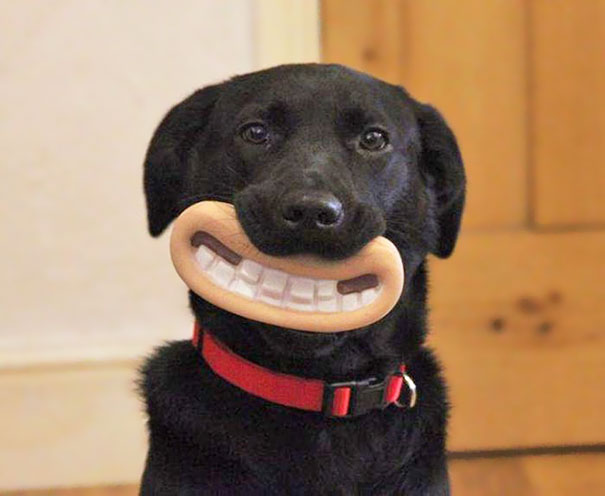 The Greatest Chew Toy Of All Time