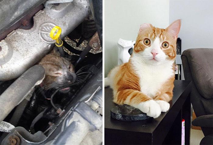 這20隻貓咪以前都曾流浪或遭遇不幸,但獲救之後的可愛模樣簡直讓我的心快炸掉了!