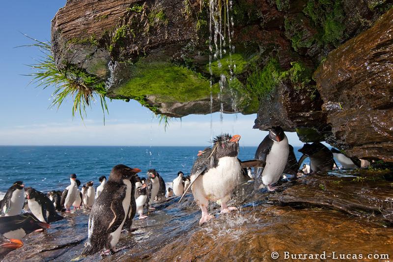 順帶一提,看來不只是人類懂得享受淋浴、就連企鵝也很喜歡!