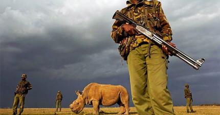 這群全身武裝的騎兵日夜守護的就是世上最後一隻雄北白犀牛,他的悲歌實在令人憤慨!