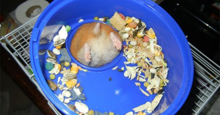 35隻今年忘記去安太歲的超倒楣可愛小動物。