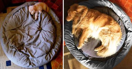 22張狗狗成長歷程前後對比照,證明他們長大了但愛一點都沒有減少!