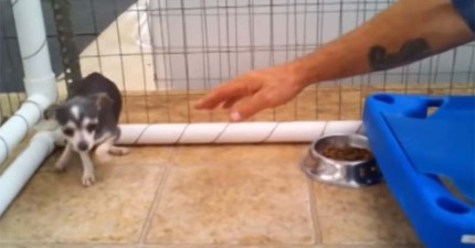 這隻飽受繁殖場虐待的狗狗已經不相信人了,但在志工將手伸出去後...