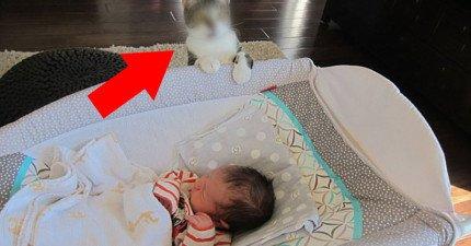 這對情侶忘了告訴貓咪他們有小寶寶了,讓貓咪第一眼露出「這什麼鬼東西」的爆笑表情!