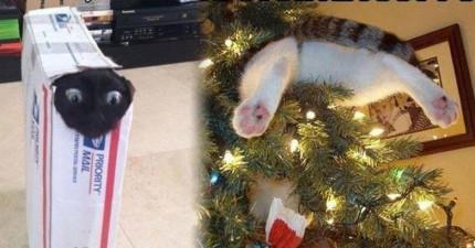24次貓咪自己證明了為什麼有「好奇害死了貓」這句話!